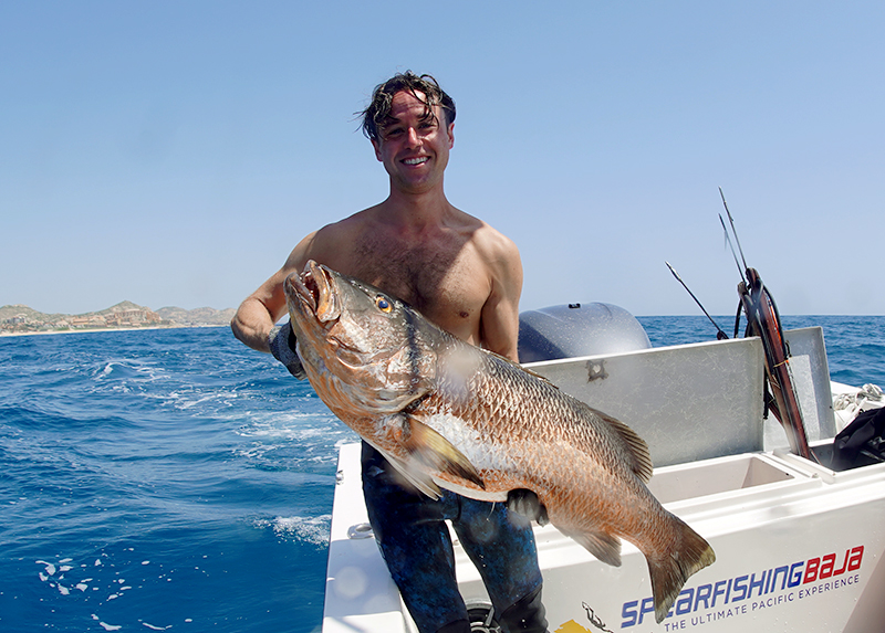 Private reef spearfishing mexico